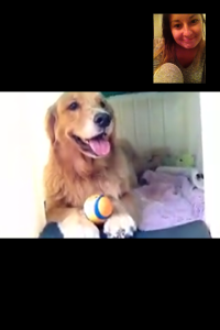 Yes, I am FaceTiming my dog.