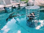Croc diving